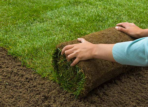 Choosing Your Central Florida Sod