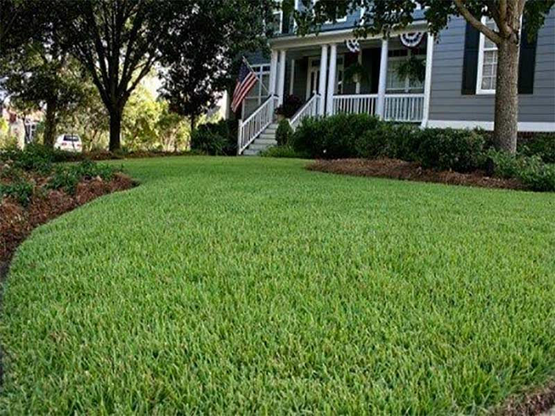 You should use fertilizers prudently to maintain turf nutrition.