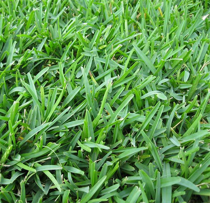 Do you need to kill off your existing grass?